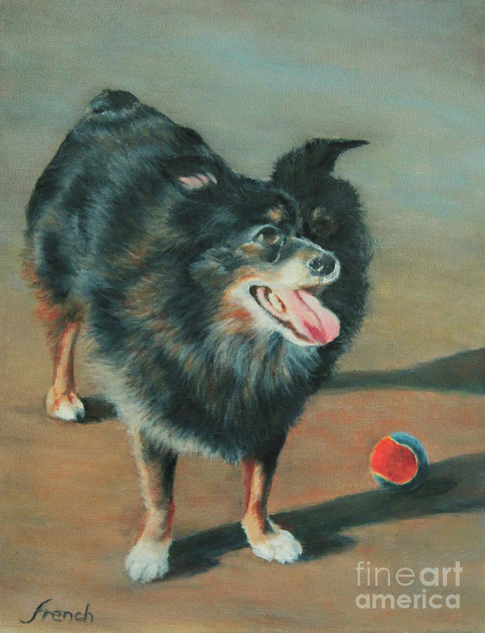 Playful Toy Australian Shepherd by Jeanette French