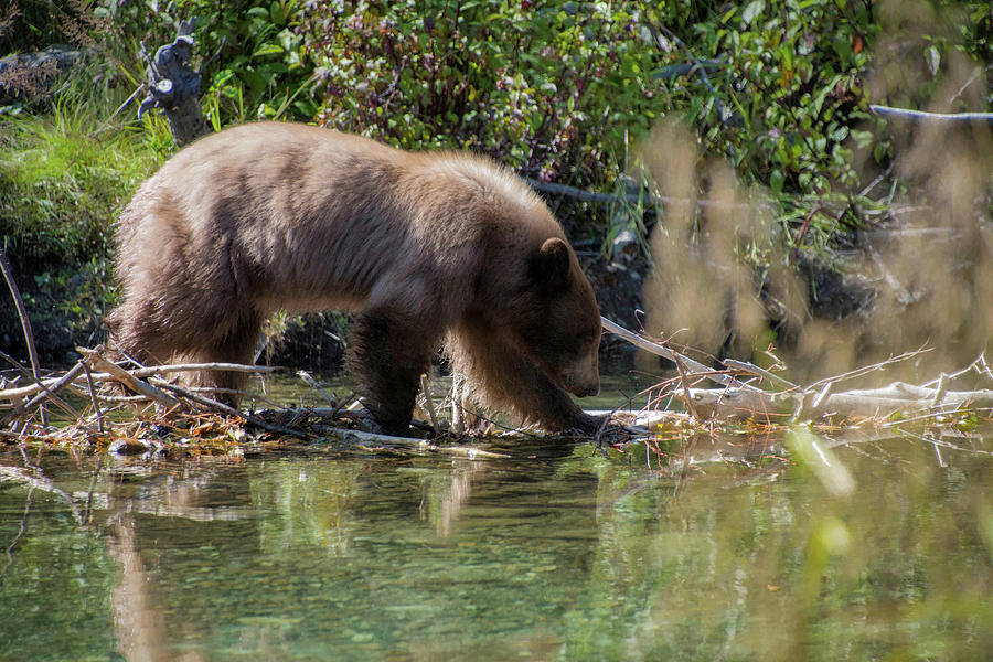Playing in the Creek by Steph Gabler