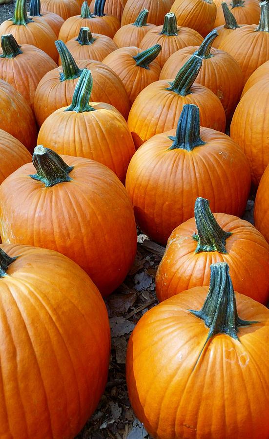 Plenty Of Pumpkins Photograph