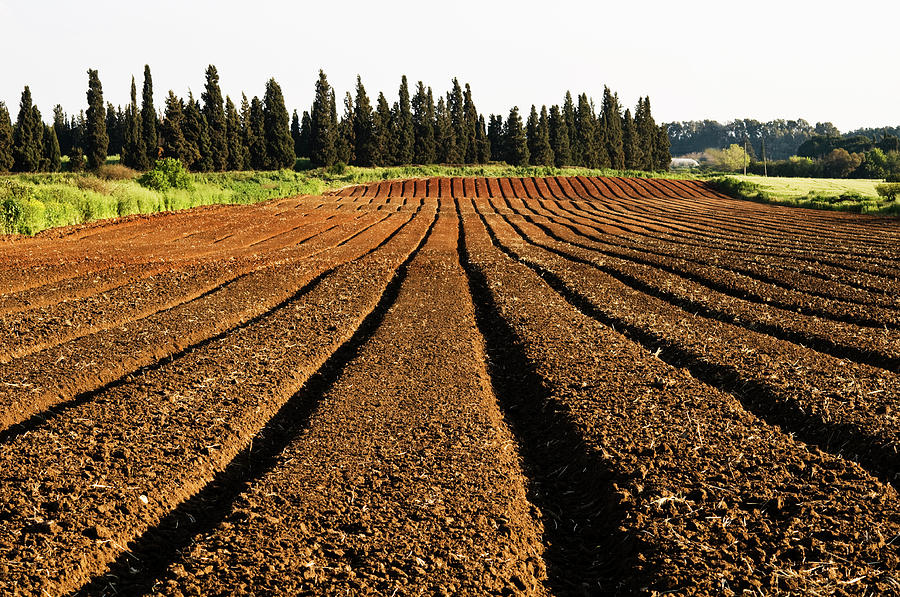 Plowed Field Photograph by Photograph By Giora Meisler