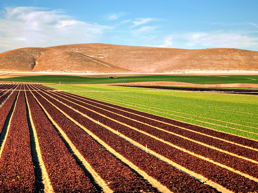 Plowed Field Photograph by Wendell Ward
