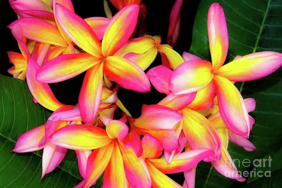 Plumeria Photograph - Plumeria Flowers - Tropic Hawaii by D Davila