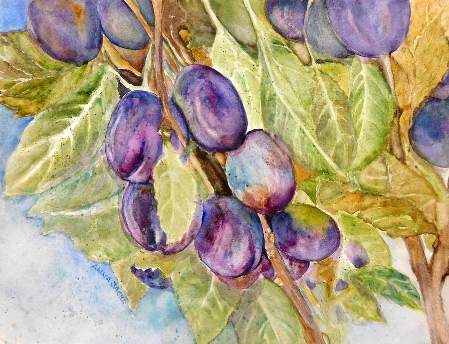 Plums on the Vine by Anna Jacke