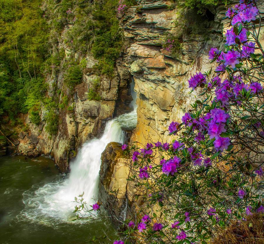 Plunge Basin by Dana Foreman