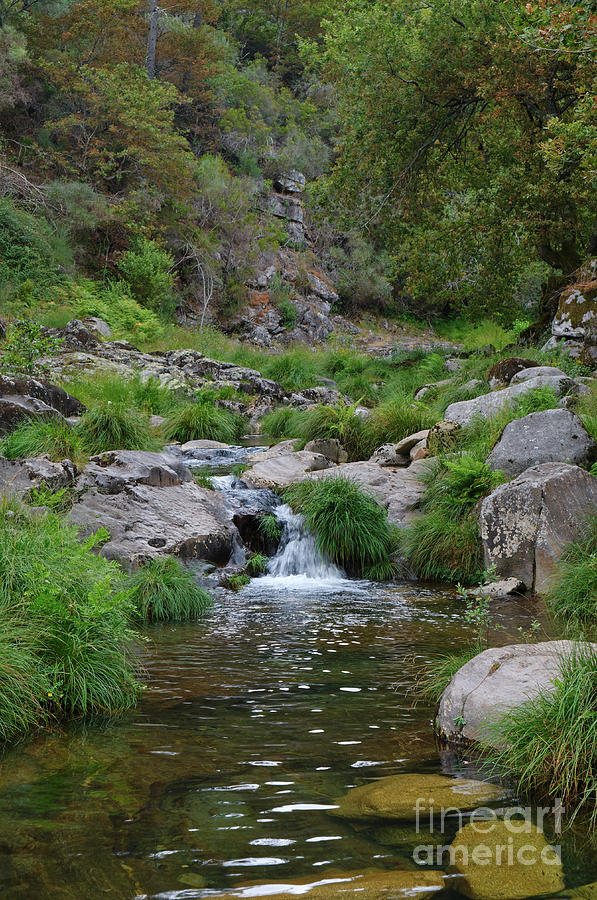 River Photograph - Poco Negro River In Carvalhais by Angelo DeVal