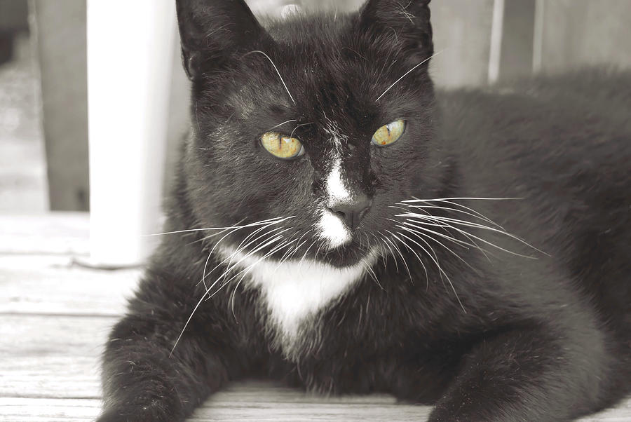 Black Photograph - Poes Black Cat by JAMART Photography