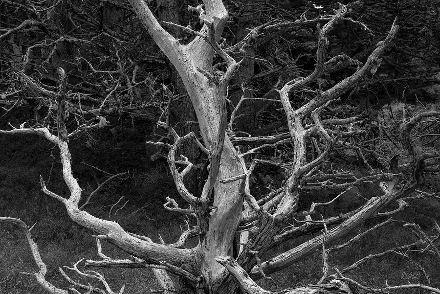 Point Lobos XIX BW by David Gordon