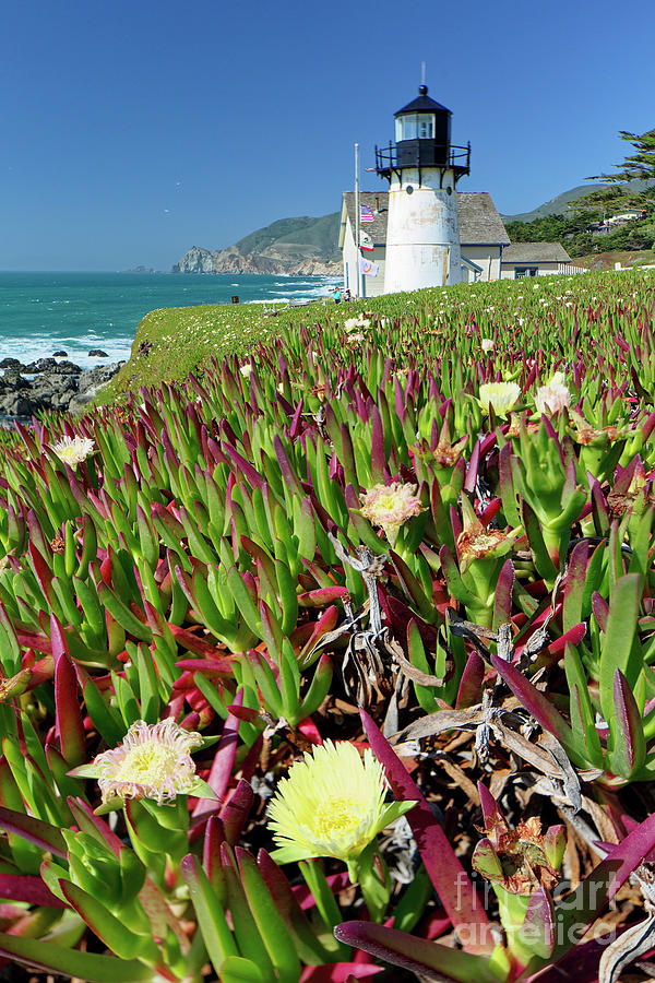 Point Montara Lighthouse with Spring Flowers by George Oze