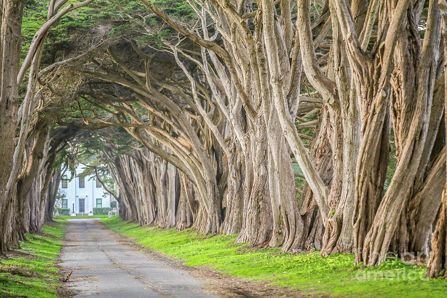 Tree Tunnel Photograph - Point Reyes Tree Tunnel Road by Eddie Hernandez