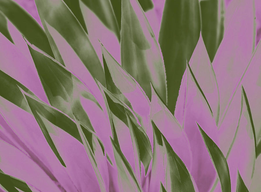 Pointed Pinkish Plantlife  by Amy Sorvillo