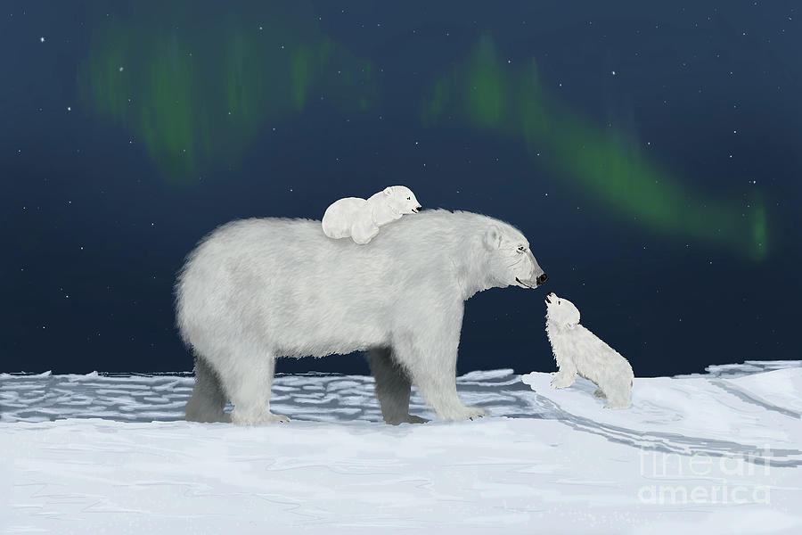 Polar Bear Family with Auroras by the Ford Family