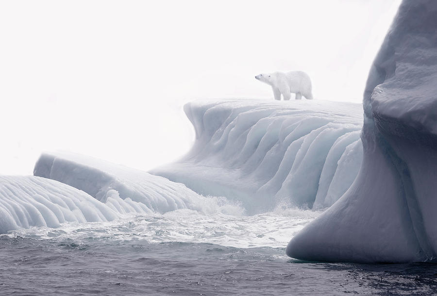 Polar Bear On Iceberg Photograph by Grant Faint