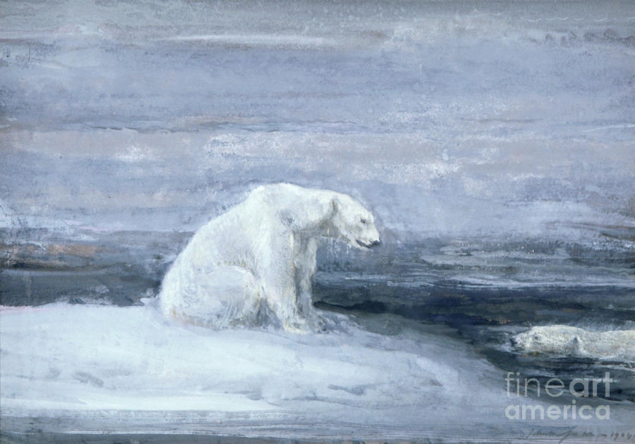 Polar Bears Watching For Seals At An Drawing by Heritage Images