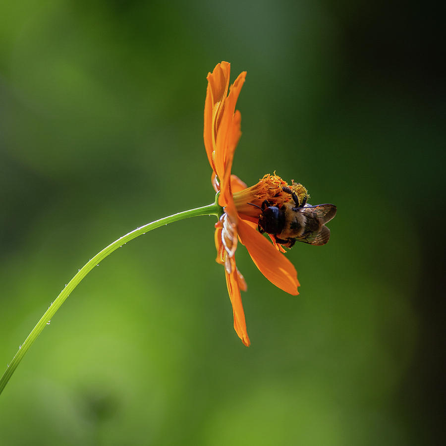Pollinating The Cosmos by Dale Kincaid