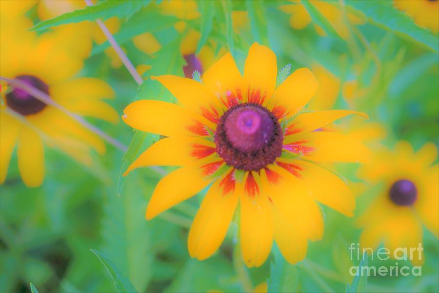Pollinators Delight by Merle Grenz