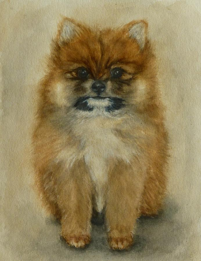 Pomeranian Puppy  by Kelly Mills