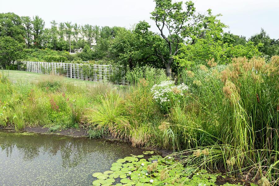 Pond and Wetland Flora at Brooklyn Botanic Garden by Dawn Cavalieri