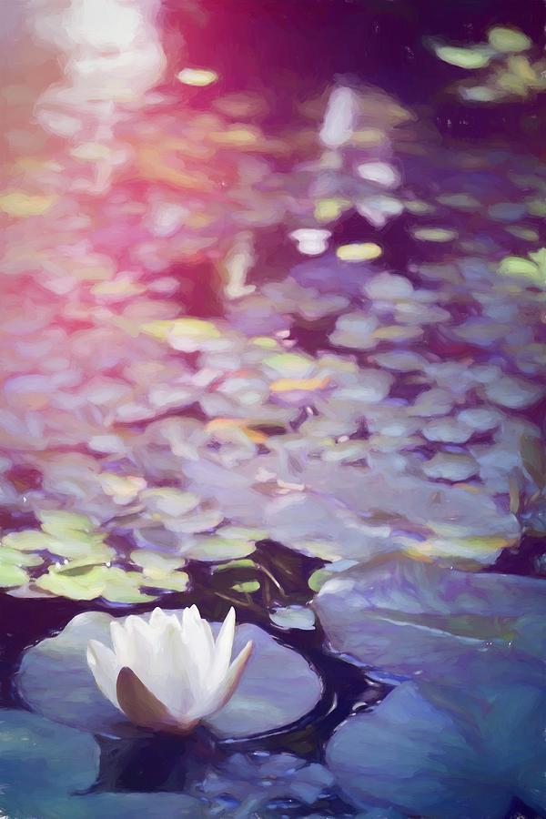 Pond Lily 36 by Pamela Cooper