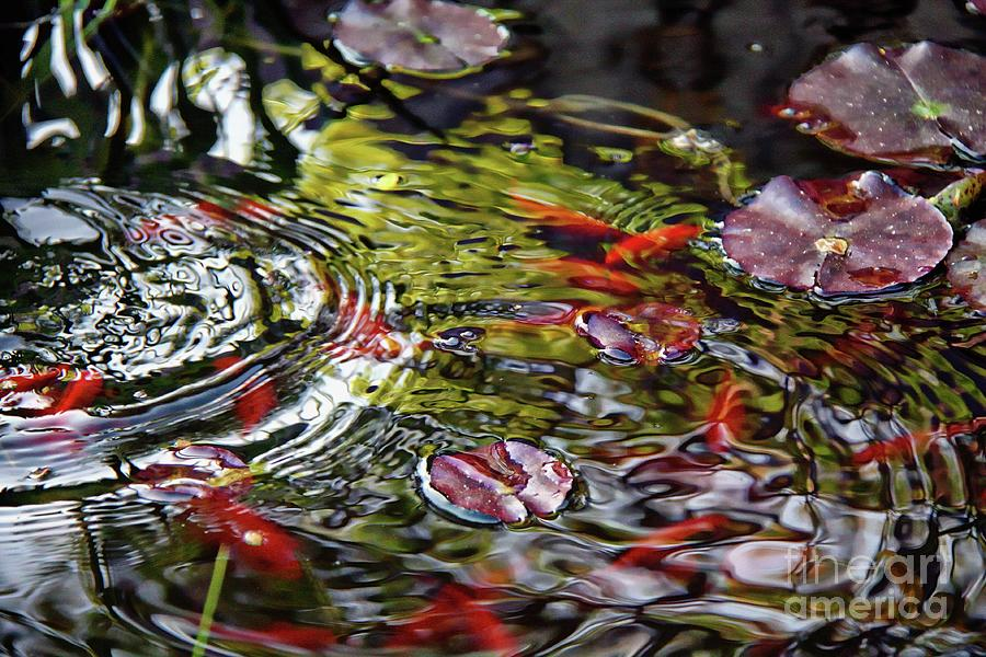 Pond  water ripples by Jolanta Anna Karolska