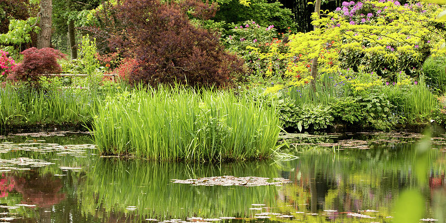 Pond Reflections in Monet's Garden by E Faithe Lester