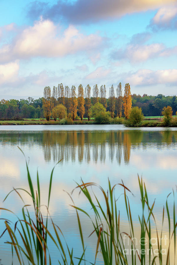 Pond Photograph - Poplars Reflecting In A Pond by Delphimages Photo Creations