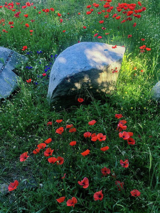Forum Romanum Photograph - Poppies And Rocks by Joseph Yarbrough
