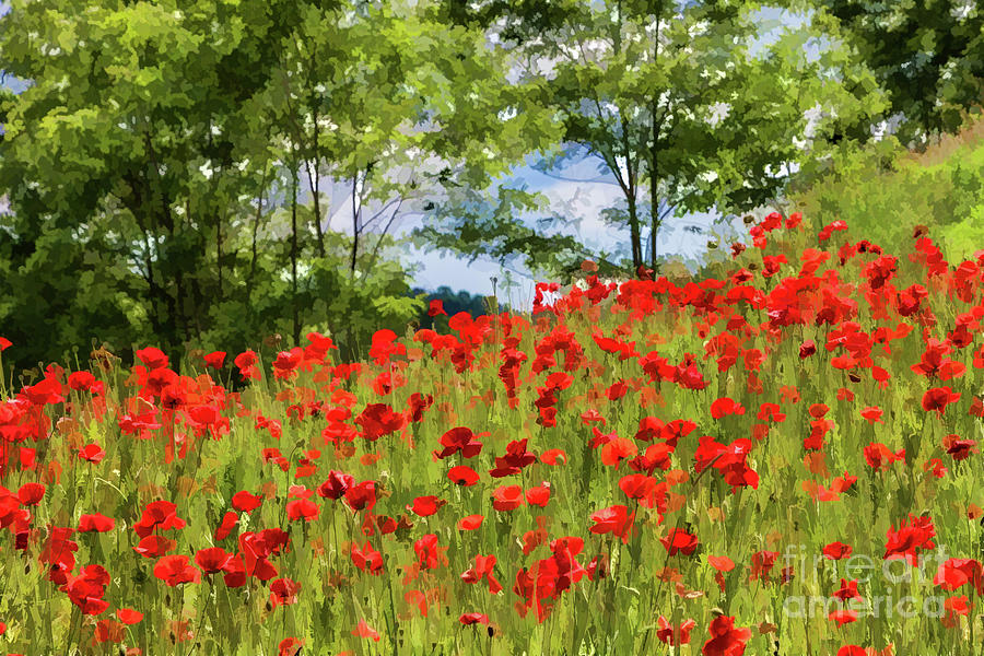 Poppies and Trees by Lisa Lemmons-Powers