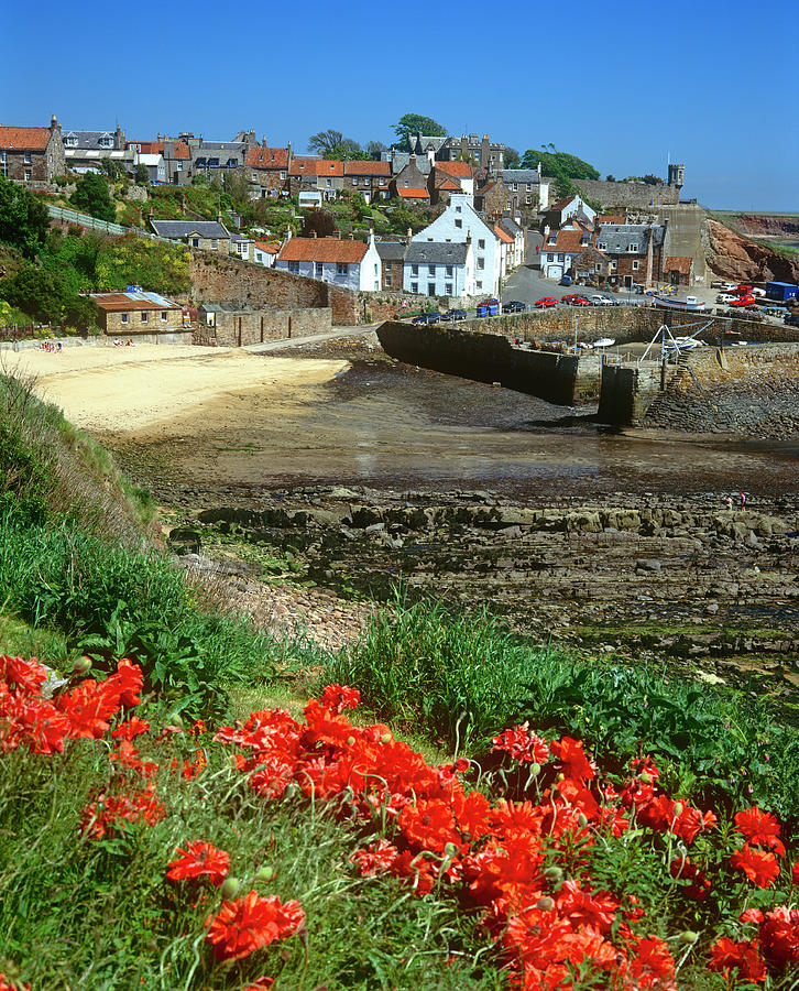 Poppies At Crail Harbour, Fife Photograph by Kathy Collins