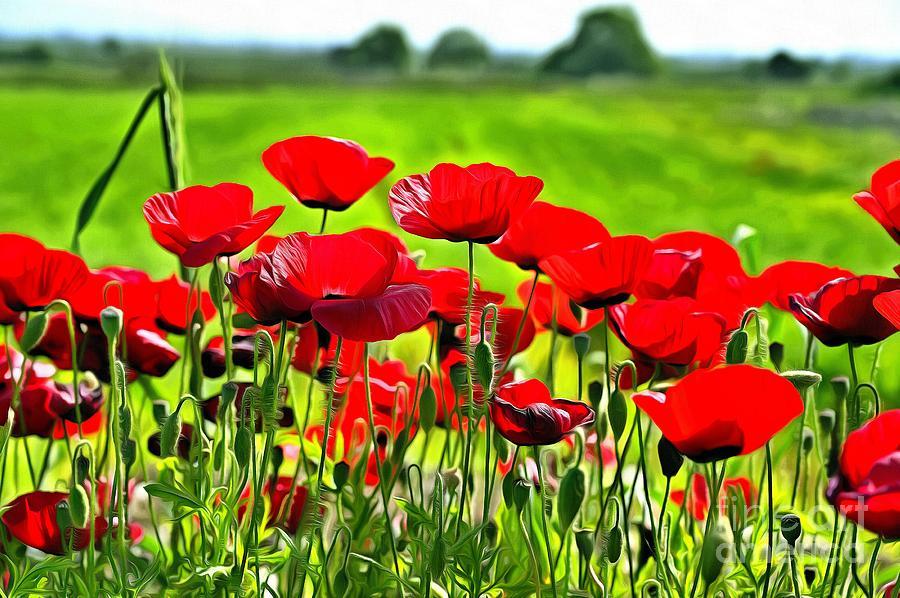 Poppies during springtime by George Atsametakis