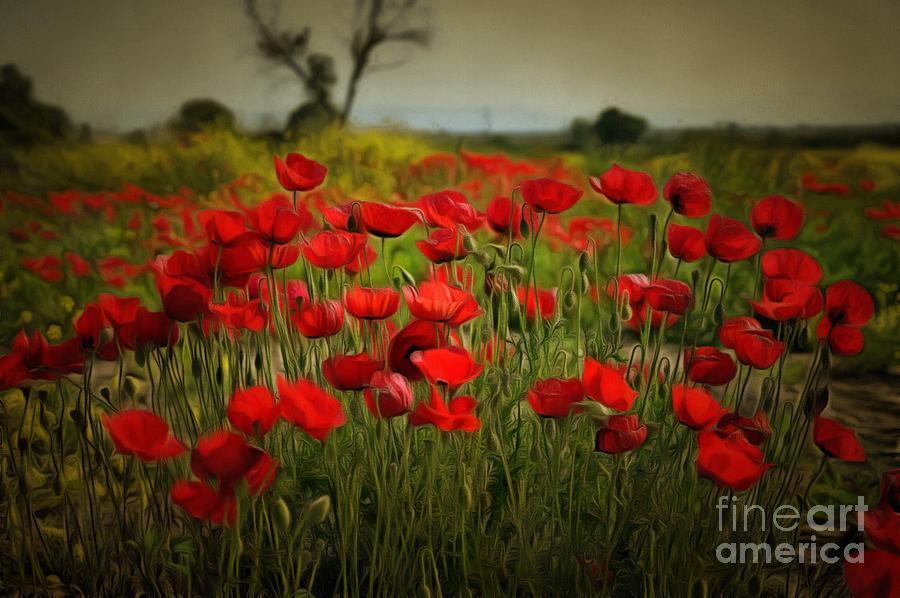 Poppies during springtime III by George Atsametakis
