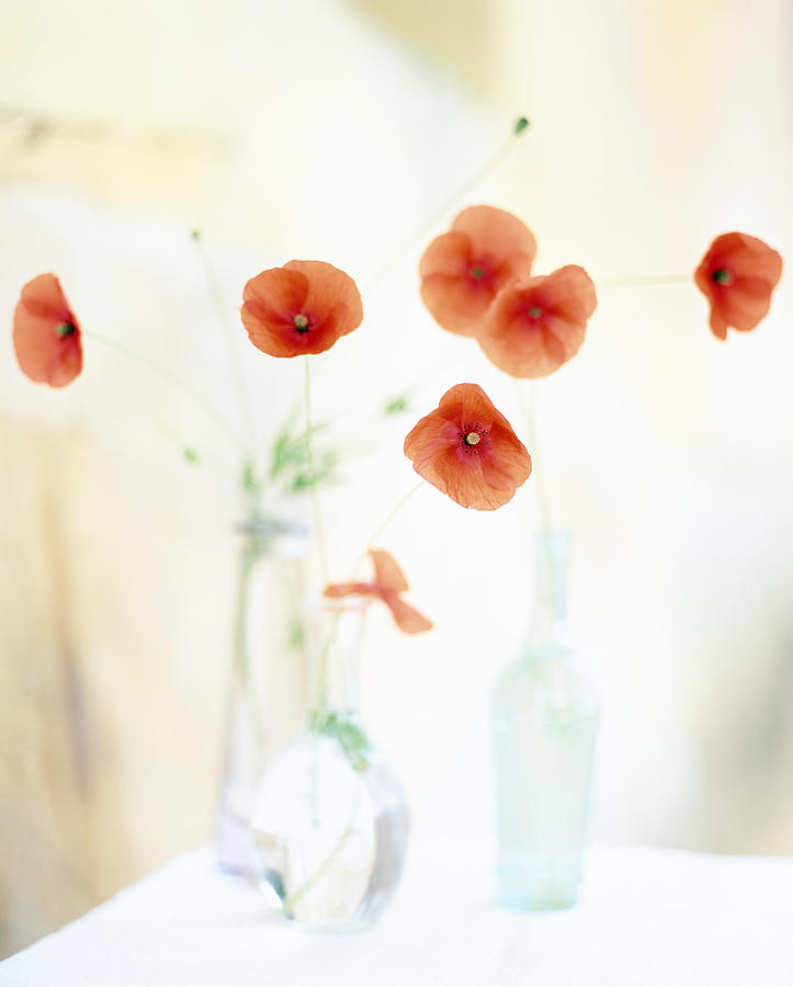 Poppies In Vases Photograph by Victoria Pearson