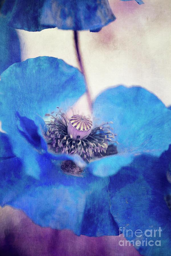 Poppy Photograph - Poppy Blues by Priska Wettstein