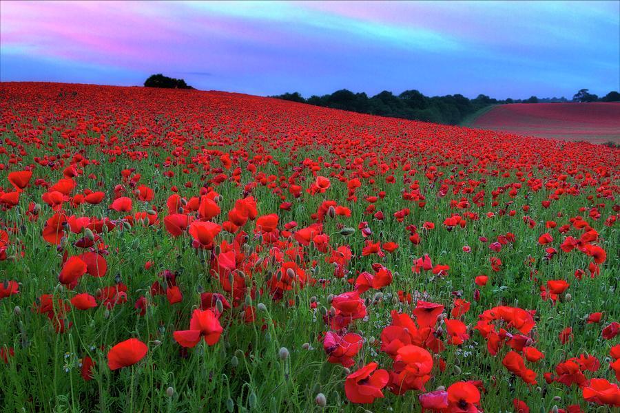 Poppy Field Photograph by Rich Jones Photography