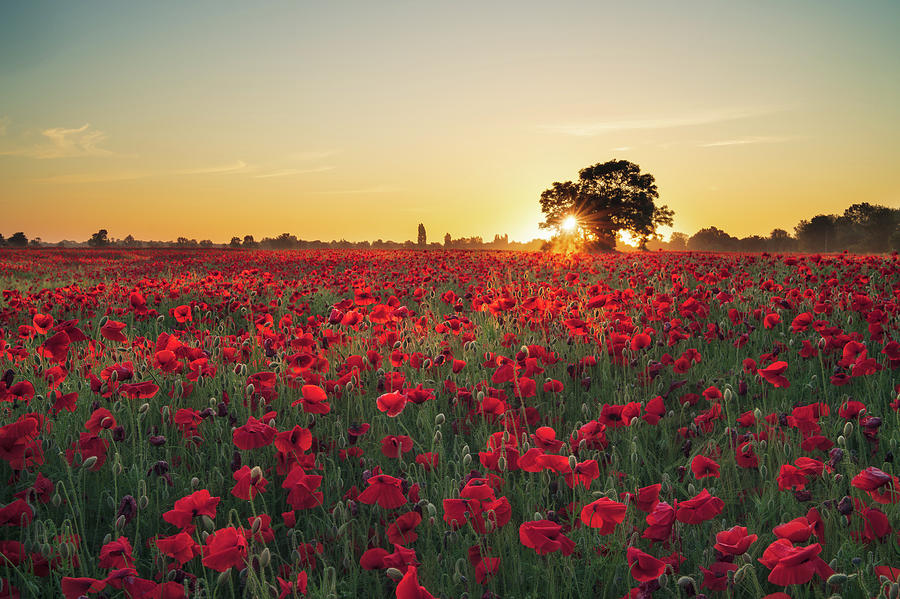 Poppy field sunrise 3 by James Billings
