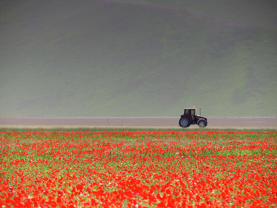 Poppy Flower Field With Tractor Photograph by Federico Gentili