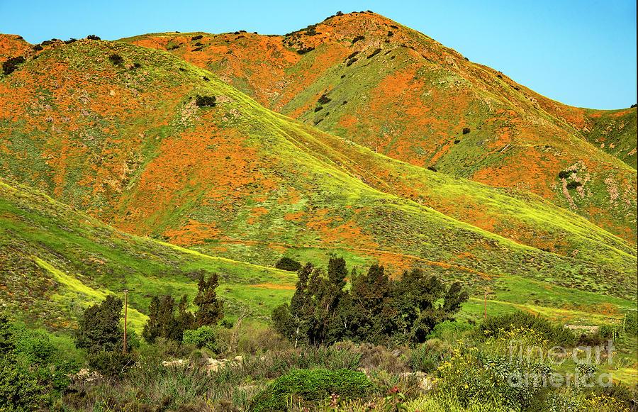 Poppies Photograph - Poppy Hills And Gullies by Mae Wertz