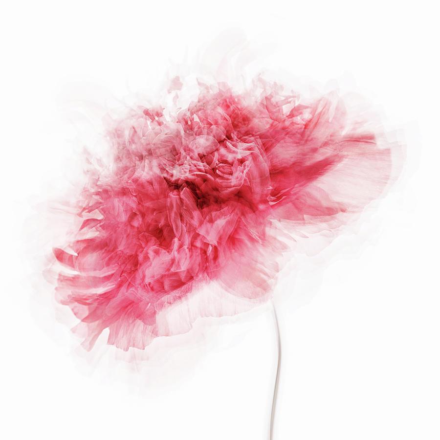 Peony Photograph - Poppy Impressions by Inna Karpova