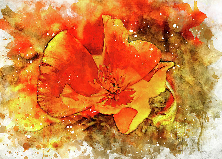 Poppy by Mark Jackson
