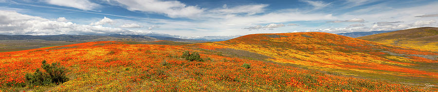 Poppy Reserve Panorama 1 by Endre Balogh