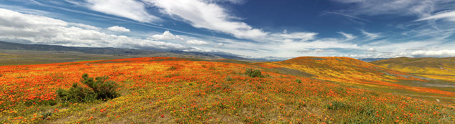 Poppy Reserve Panorama 2 by Endre Balogh