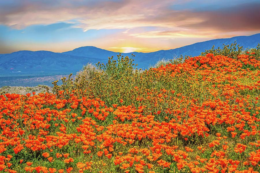 Poppy Superbloom Sunrise 2019 by Lynn Bauer