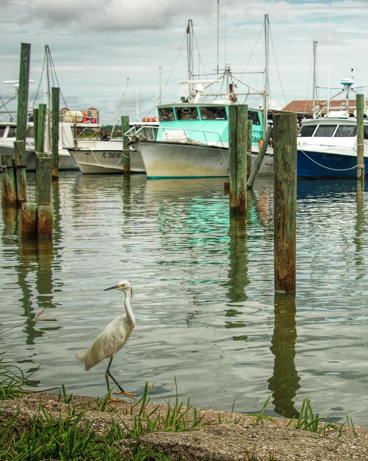 Port Orange Habor by Dorothy Cunningham