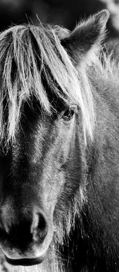 Portait of a Wild Mustang by Bob Decker