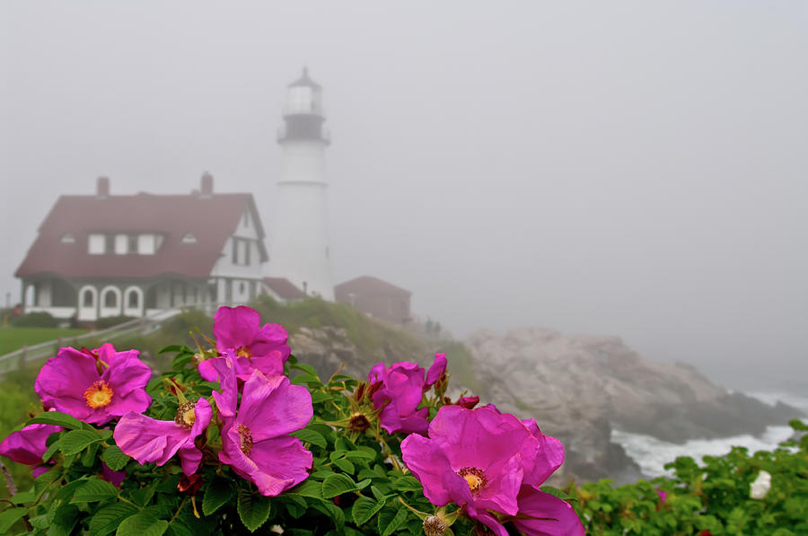 Portland Headlight With Rosa Rugosa And Photograph by Www.cfwphotography.com