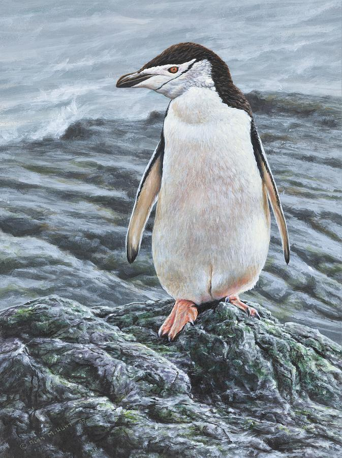 Portrait of a Chinstrap Penguin by Alan M Hunt by Alan M Hunt