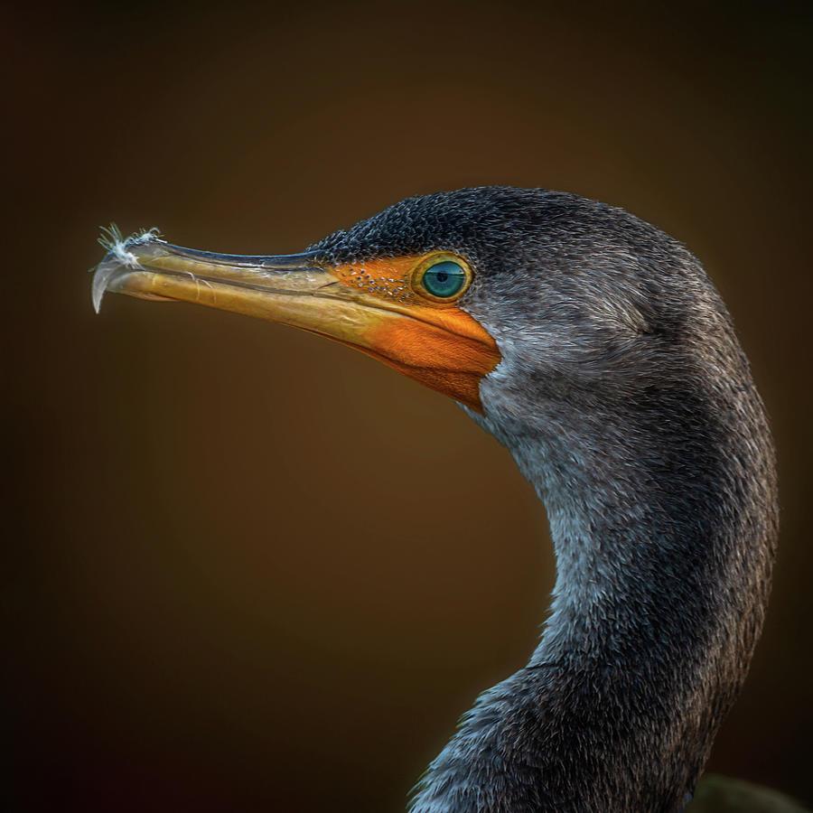 Portrait of a Cormorant by Cyndy Doty
