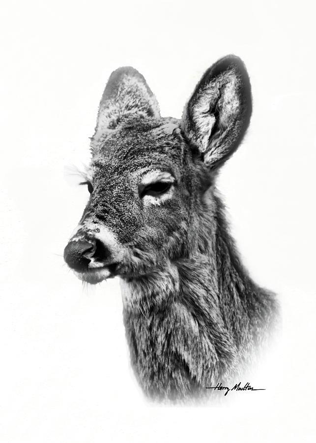 Portrait of a Deer by Harry Moulton