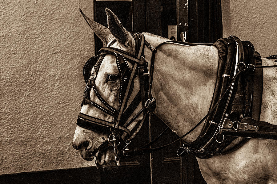 Portrait of a horse by Jason Hughes