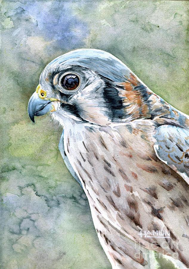 Portrait Of A Kestrel Painting By Steve Hamlin