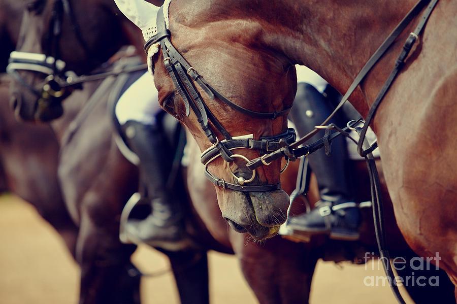 Pets Photograph - Portrait Of A Sports Stallion. Riding by Elya Vatel